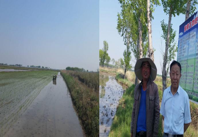 2018年5月酵素水稻