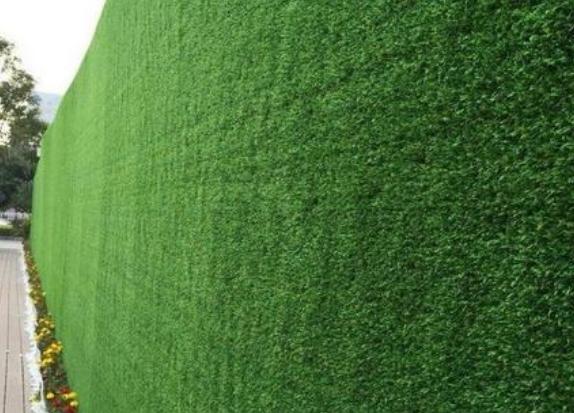 工程围墙装饰草