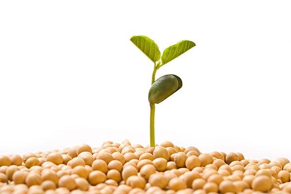 绿庄苑全自动豆芽机小编:晒种有两种情况