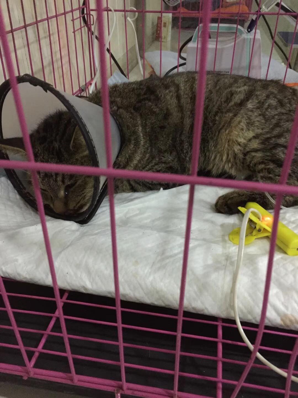 猫瘟治疗1