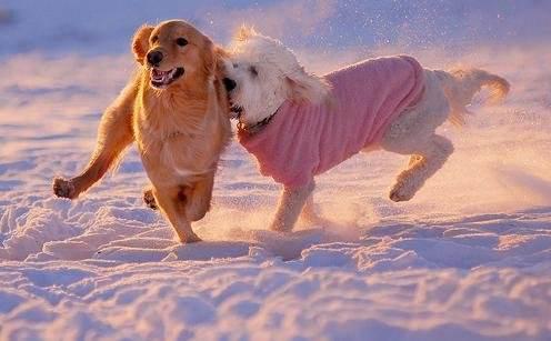 眉山宠物医院带你了解为何要给宠物多一点爱!