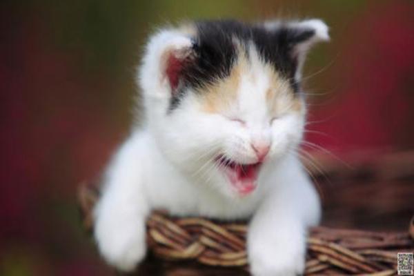 眉山宠物训练方法