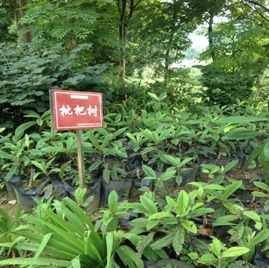 贵州绿化公司
