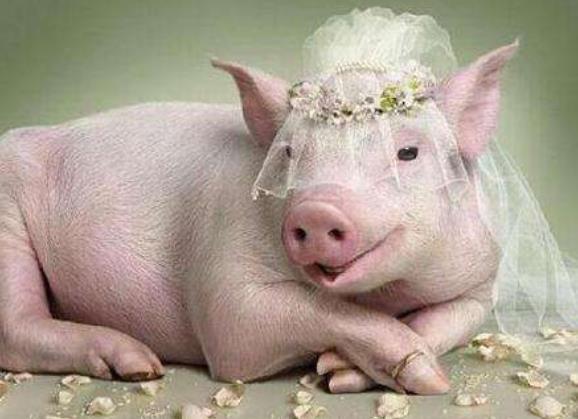 自来水管道清洗加盟邀您关注新闻猪肉持续涨价,多地调控!