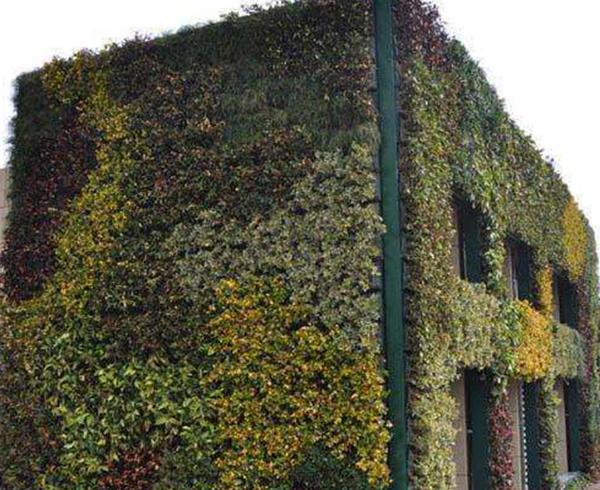 室外立体绿化