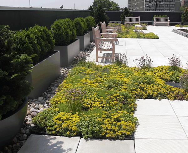 屋顶垂直绿化