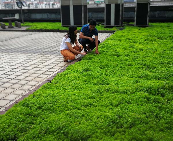 轻质屋顶绿化