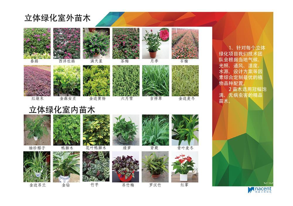 立体绿化苗木