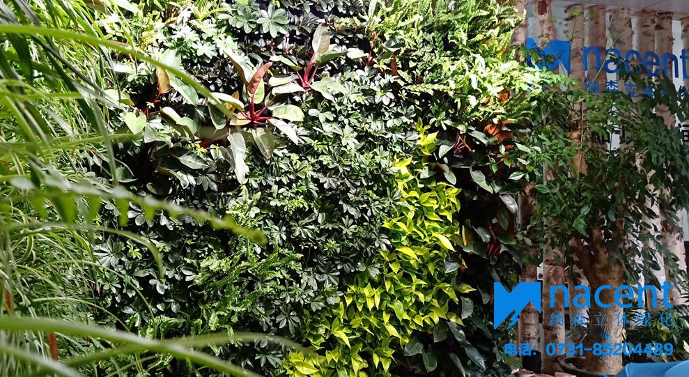 湖南纳森生态植物墙