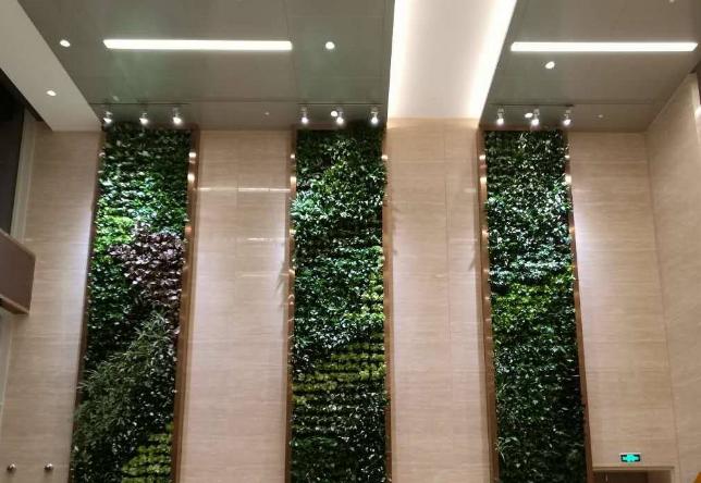 湖南植物墙公司告诉您立体绿化植物墙是怎么出现的