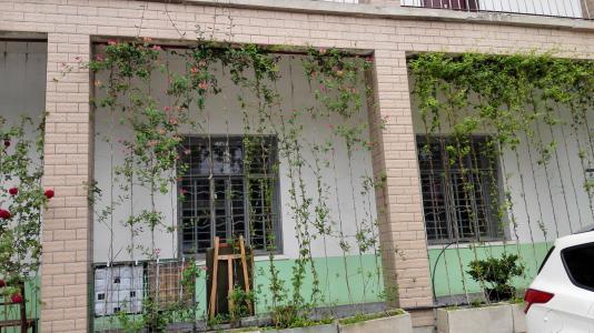 长沙垂直绿化——能生长的墙壁