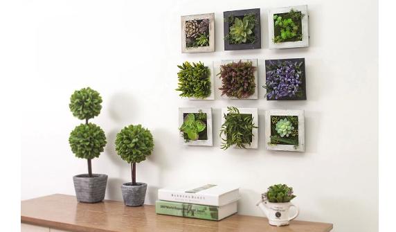 还在为房屋装修烦恼?植物墙或许能帮到您