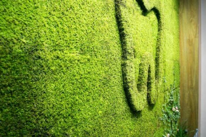 您既然可以在家里种植许多的植物   为什么不在家中安装益处更大的植物墙呢?