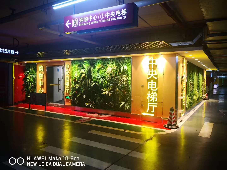 云南植物背景墙