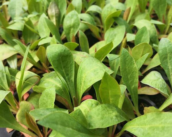 大理花卉种子批发教你如何正确采收种子,储存种子?
