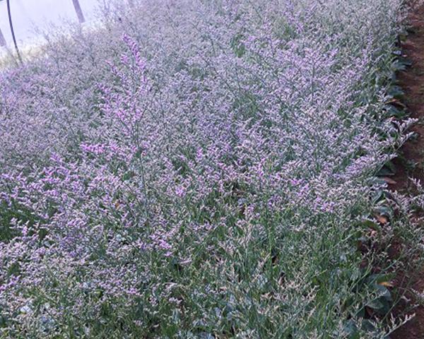 普洱花卉种苗基地在播种花卉种子及养护管理时需要注意哪些问题?