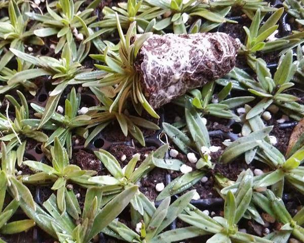 斗南花卉培育基地分享一些有关花卉种子播种育苗的方法