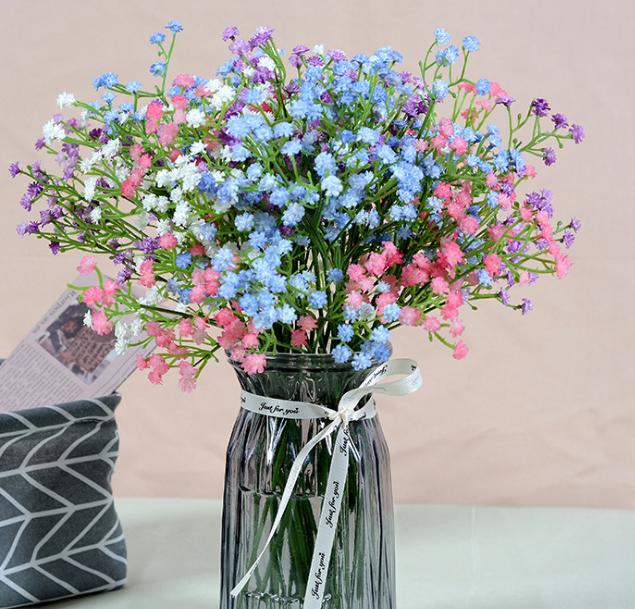 满天星花卉种苗