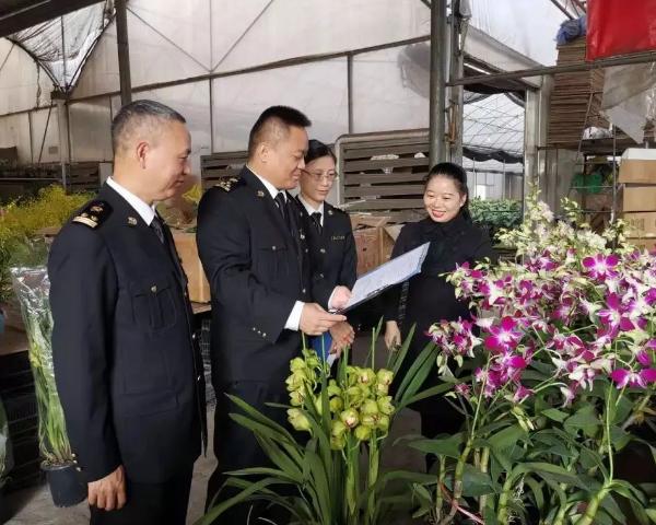 斗南花卉种苗基地
