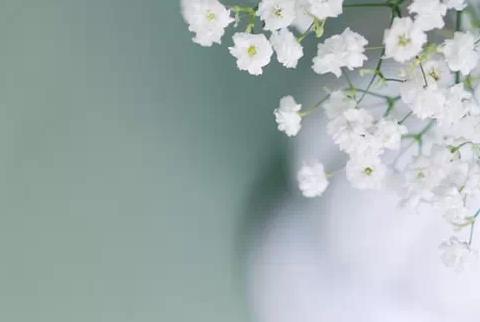 「满天星种苗」栽培技术及病虫防治