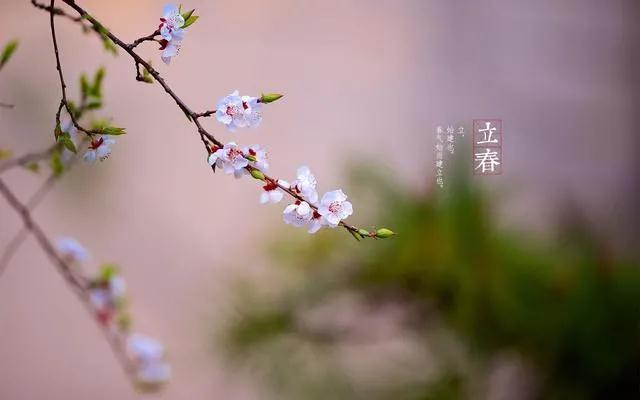 春到人間草木知