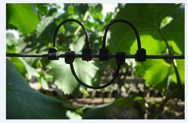 葡萄树绑枝卡价格,木葡萄和蒲桃有什么区别