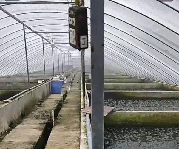 在什么时候建设青蛙养殖基地比较合适!