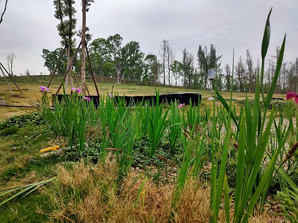 江家艺苑人工湿地人工项目