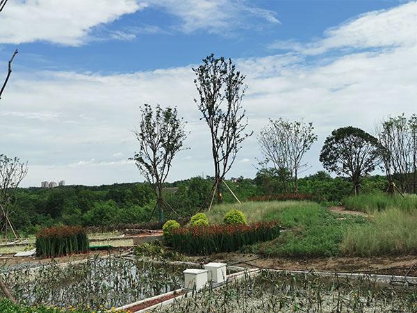 简阳三岔湖旅游接待中心人工湿地项目