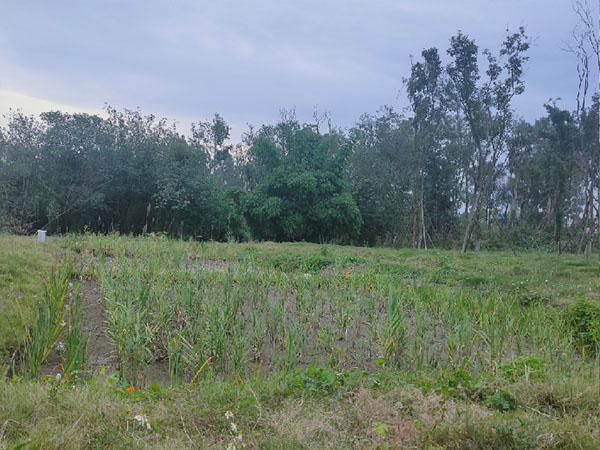 青龙湖湿地公园2期人工湿地项目