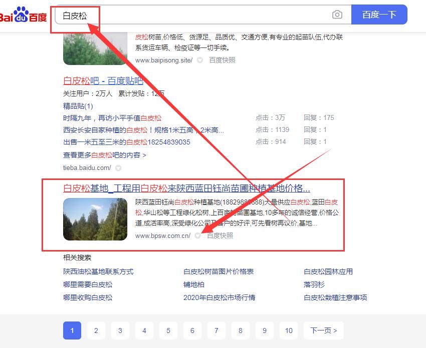 """竞价指数词点击一次5.49元的关头词""""白皮松""""排名中国一级特黄大片"""
