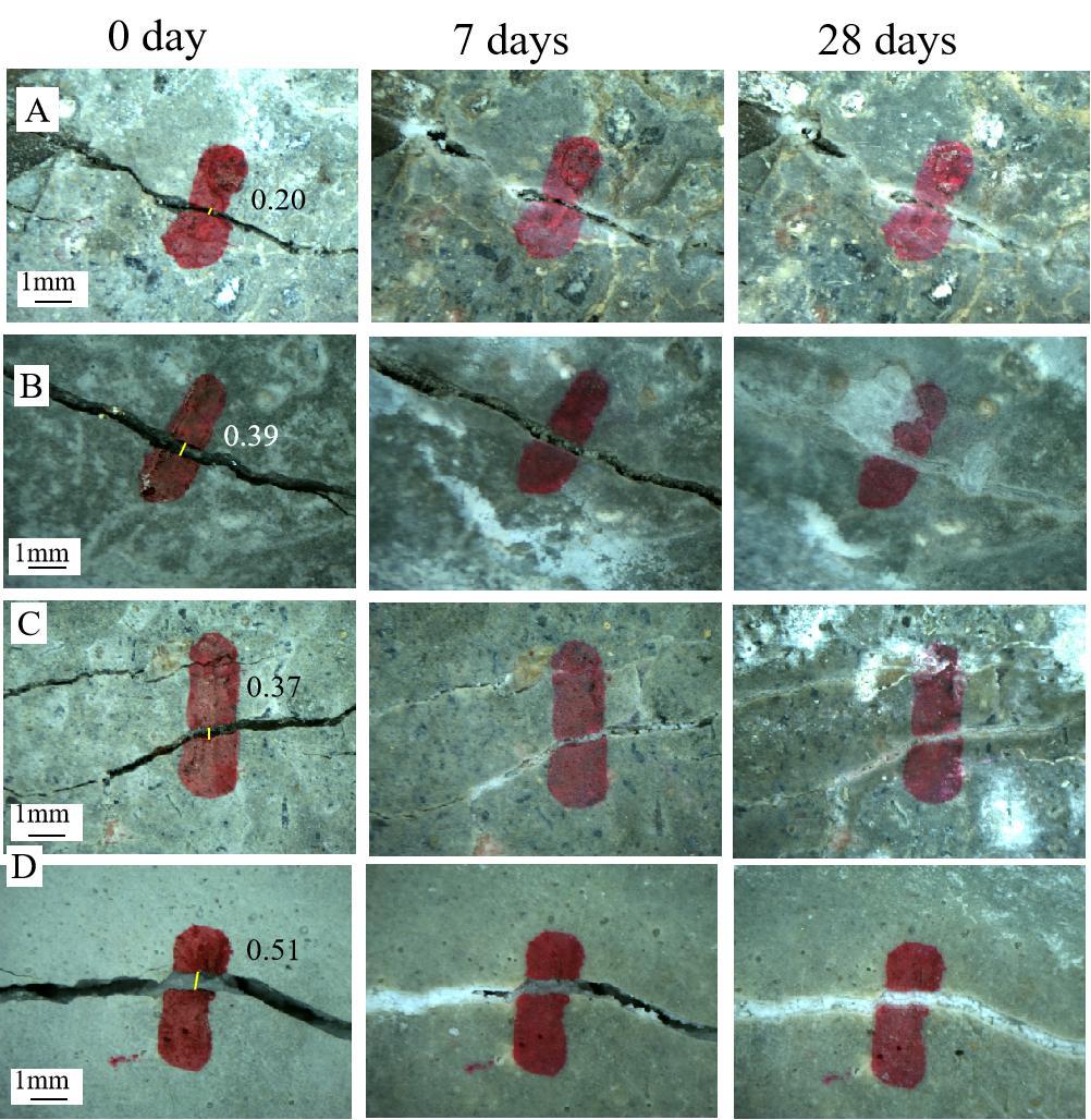 微生物与膨胀珍珠岩相结合的自修复混凝土技术