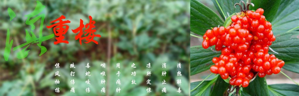 云南滇重樓種子