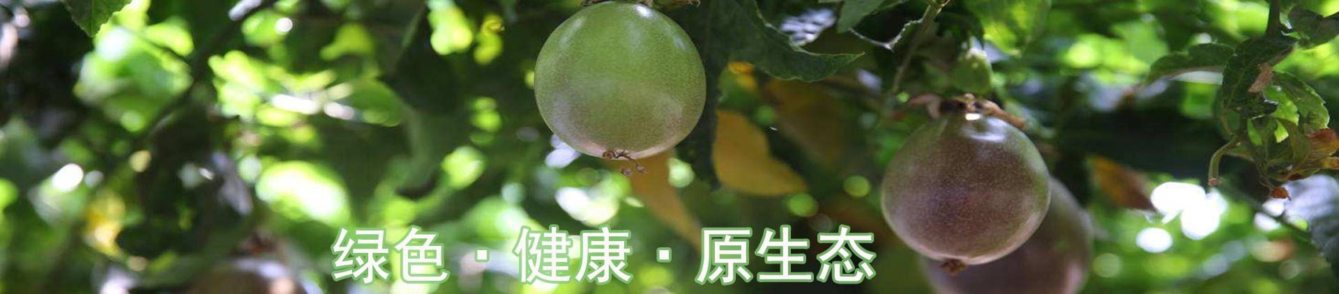 云南百香果种植