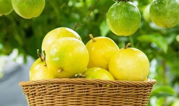百香果多少钱一斤