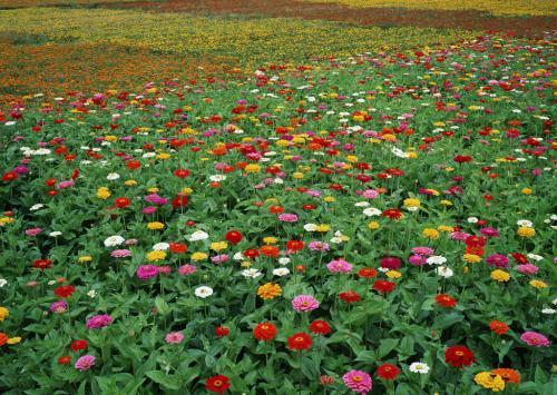 宿迁种子帮你区分蔬菜新种子和…