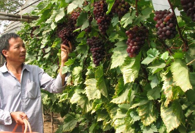 云南葡萄包装箱葡萄套袋批发最好价格最便宜的厂家就是恒达