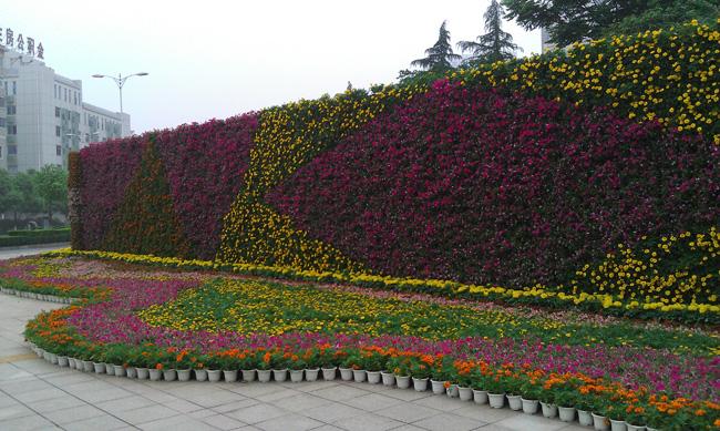 花卉租赁1