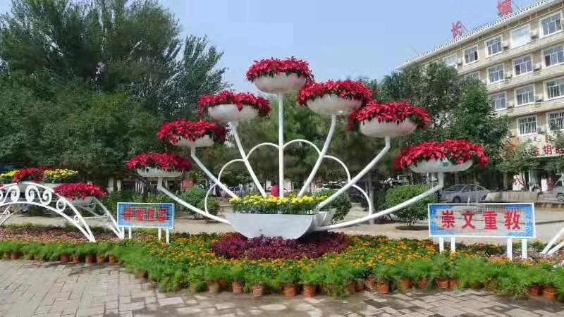 花卉租赁6