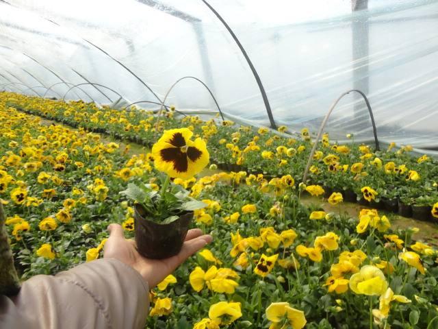 花卉租赁7
