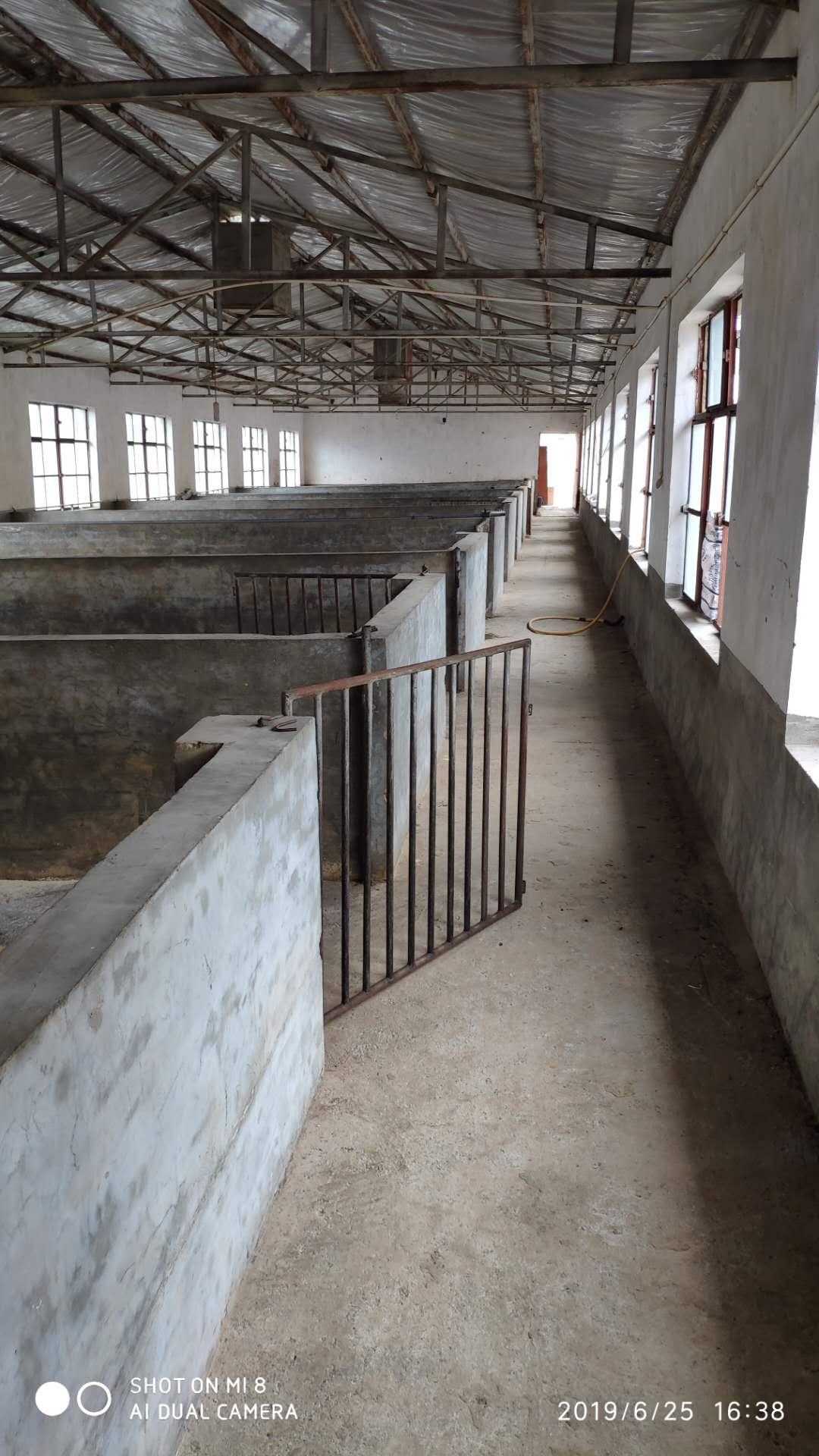 昆明猪厂监控