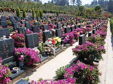 金陵公墓墓区环境