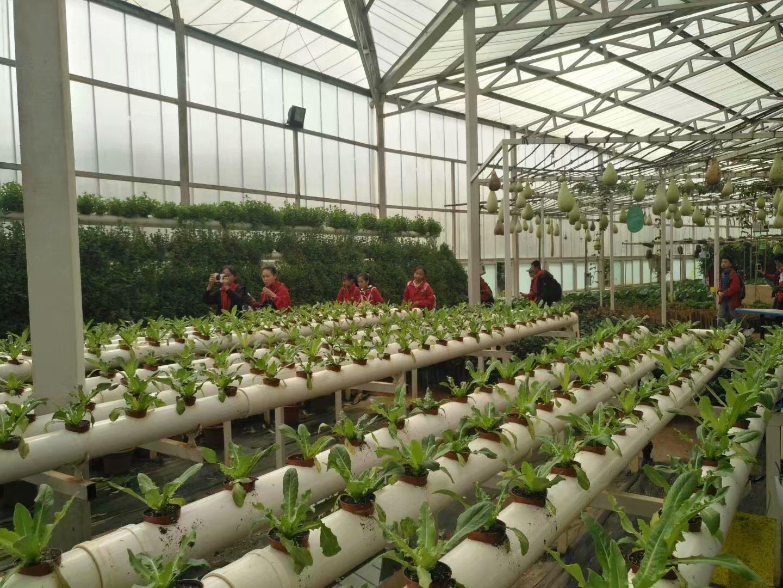 农耕体验让孩子感受一下田园生活