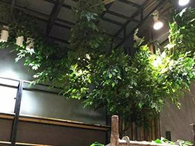 植物绿雕,灵活应用的绝美景观