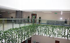 昆明垂直绿化