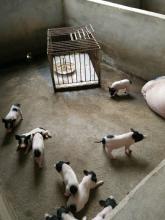 贵州mini智慧养殖项目