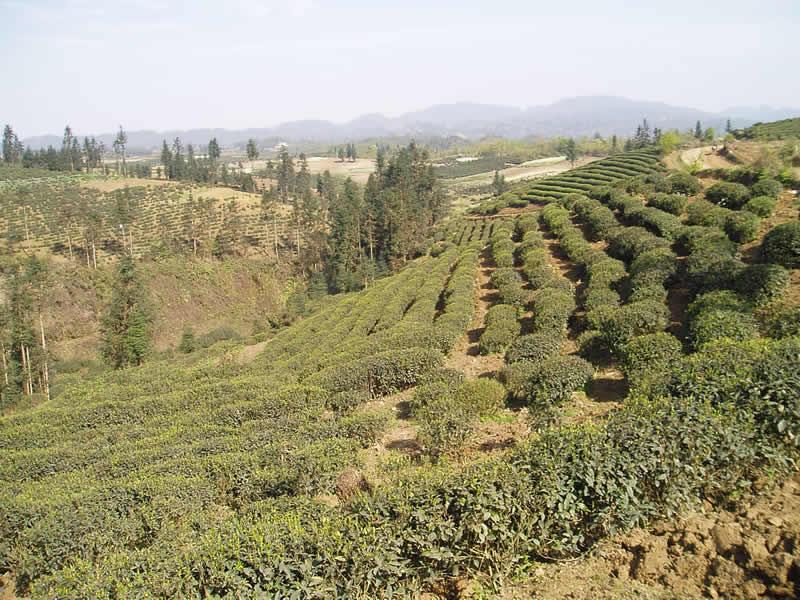 大关县茶叶有限公司绿色食品认证