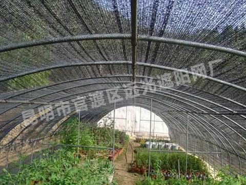 三七种植遮阳网