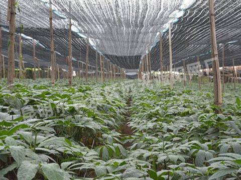 云南三七种植遮阳网厂家