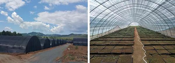 连栋温室使用,分内遮阳、外遮阳